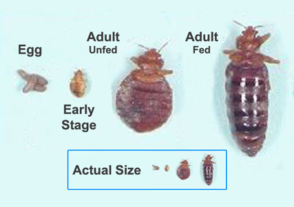 Bed Bugs City of Detroit