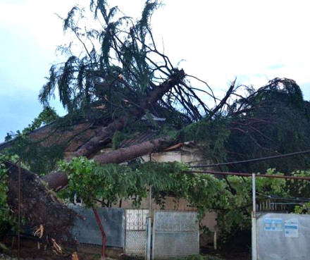 tree_crushed_house_mareuli_gamgeoba_photo