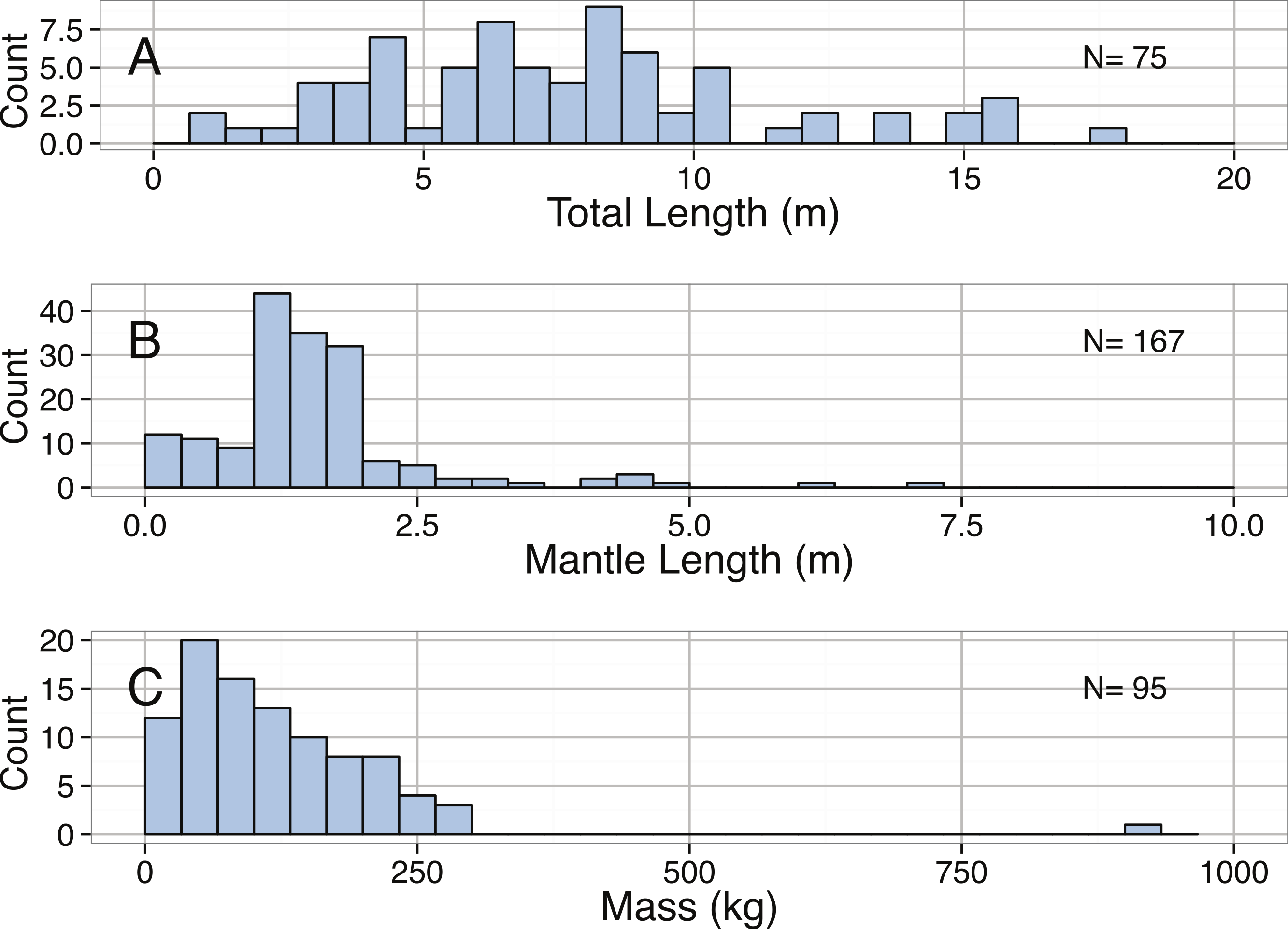 Size M Sizing Ocean Giants Patterns Of Intraspecific Size Variation In