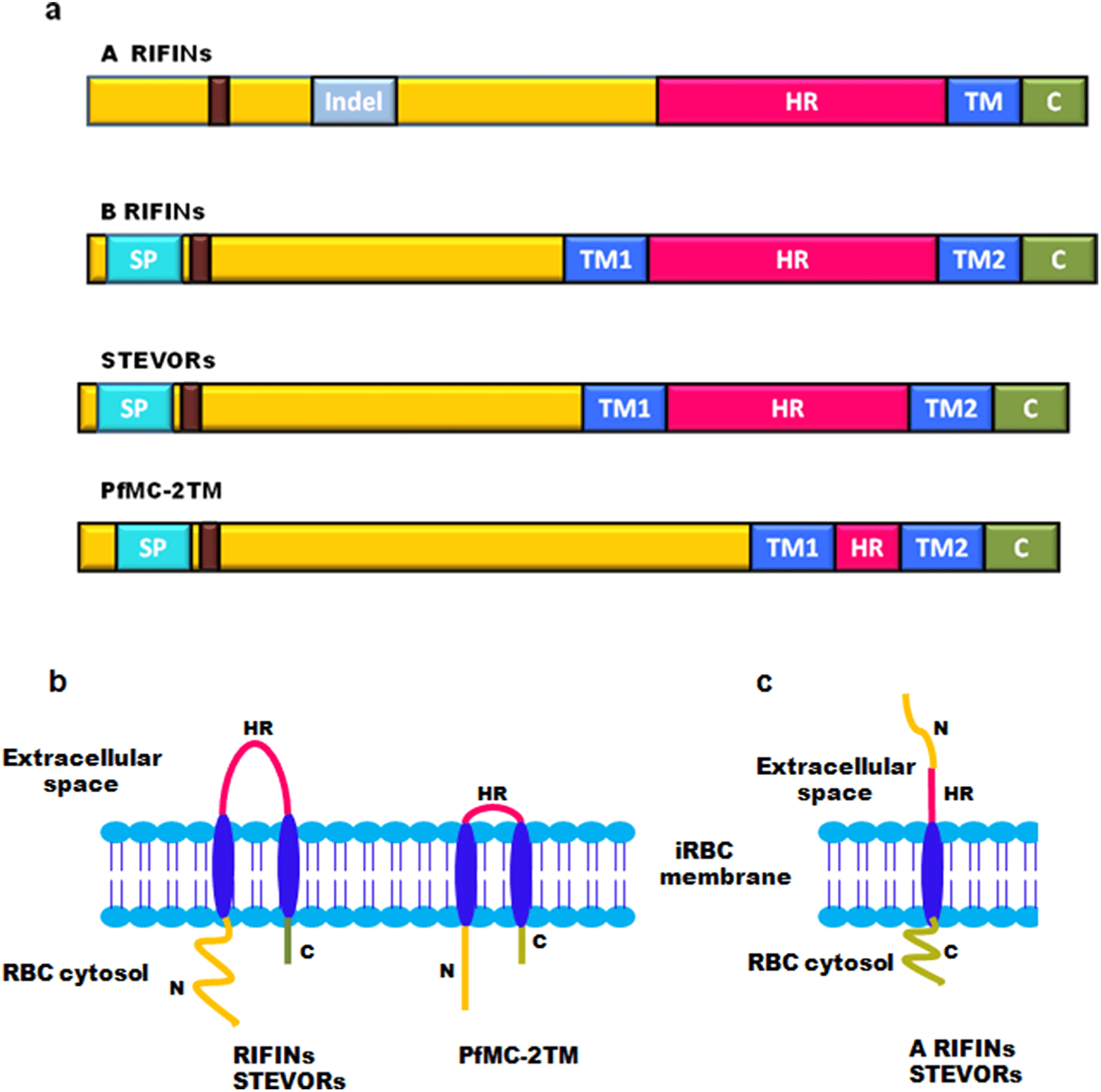 Amw 505 Ix 2tm Proteins An Antigenically Diverse Superfamily With Variable