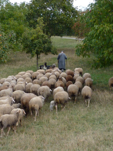 If God is your shepherd, you are blessed.