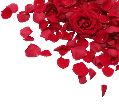Rose Petals Falling Wallpaper Transparent Gif Elemental Drift Of Bubbles