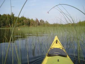 Heading through wild rice towards the locks connecting Middle Saranac Lake to the Saranac River.