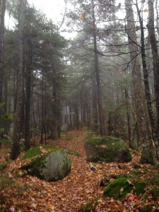The mist lent an air of mystery to the hemlock forest on the Cabin Trail.