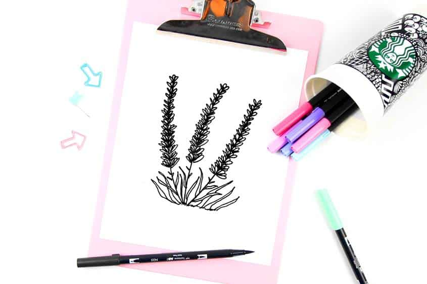Lavender Drawing - How to draw lavender flower step by step tutorial