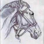 como dibujar a lapiz un caballo (4)