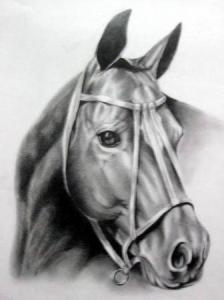 como dibujar a lapiz un caballo (7)