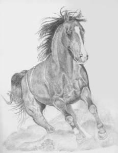 Dibujos a lapiz de caballos (2)
