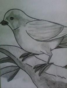 Dibujos a lápiz para principiantes (12)