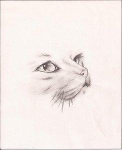 Dibujos a lapiz de gatos (13)
