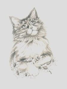 Dibujos a lapiz de gatos (4)