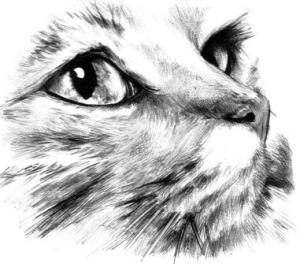 Dibujos a lapiz de gatos (6)