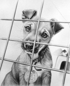 Dibujos de animales a lápiz (15)