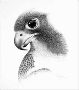 10 Hermosos dibujos a lápiz de animales (10)