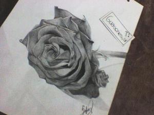 11 Hermosos dibujos a lápiz de rosas (4)