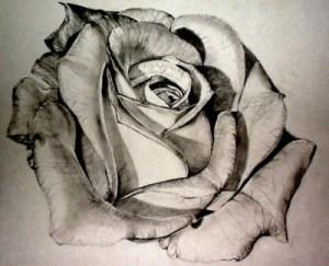 11 Hermosos dibujos a lápiz de rosas (7)