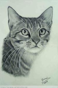 9 Bonitos dibujos a lápiz gatos (1)