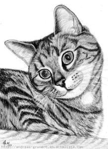 9 Bonitos dibujos a lápiz gatos (9)