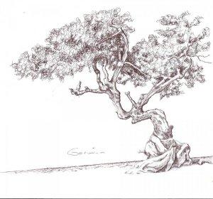 10 Bonitos dibujos a lápiz de árboles (4)