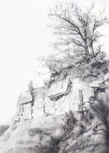 10 Bonitos dibujos a lápiz de árboles (7)