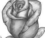 10 dibujos a lápiz de rosas para tatuajes (1)