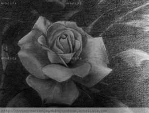 10 dibujos a lápiz de rosas para tatuajes (10)