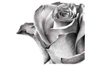 10 dibujos a lápiz de rosas para tatuajes (8)