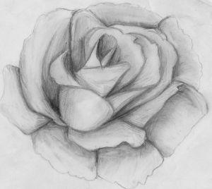 10 dibujos a lápiz de rosas para tatuajes (9)