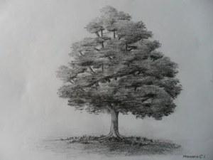 11 Nuevos dibujos a lápiz de árboles (6)