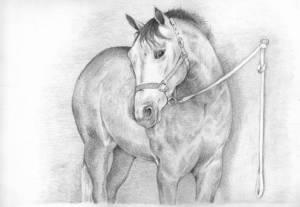 11 dibujos a lápiz de caballos (5)