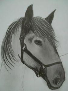 11 dibujos a lápiz de caballos (9)