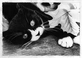 10 dibujos a lápiz de gatos (9)
