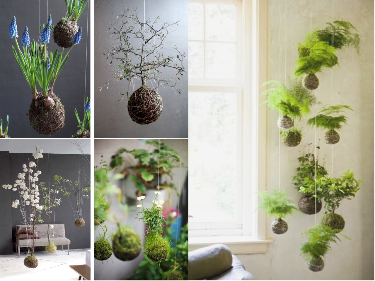 Ideas Para Decorar Mi Hogar 10 Ideas De Decoración Con Plantas Colgantes