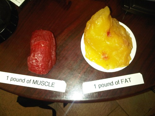 1 Pound of Body Fat vs. 1 Pound of Muscle