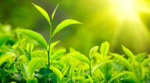 fotosintesis plantas