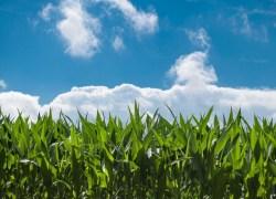 Revisões dos talões de produtor rural ocorre até 24 de fevereiro em Veranópolis