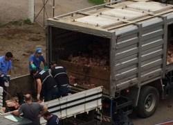 Força-Tarefa encerra com apreensão de 11 toneladas de carne irregular em Bento