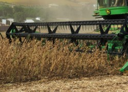 Colheita da safra de grãos está praticamente encerrada no estado