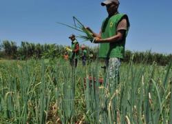 PIB Agropecuário terá crescimento de 10,9% este ano, prevê Ipea