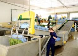 Cooperativa Vinícola Garibaldi cresce 30% e planeja investimentos