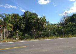 Fiscalização da Arpa flagra crime contra a flora no Vale dos Vinhedos
