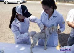 Campanha de vacinação contra a raiva em cães e gatos ocorre em Flores da Cunha