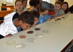 18ª edição do Programa Embrapa & Escola reúne crianças em Bento