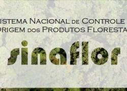 Licenciamento Florestal será retomado em Bento a partir de segunda-feira