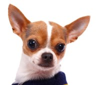 Cute-Dig-Defence-Dog