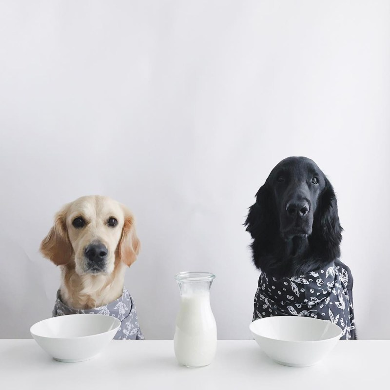 Large Of Ibs In Dogs