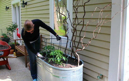 Potting Soil And Container Gardening Dig For Your Dinner