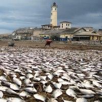 40年後の2050年には世界中の海から魚がいなくなるらしい