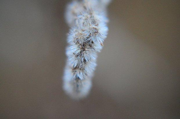 macro close up flower
