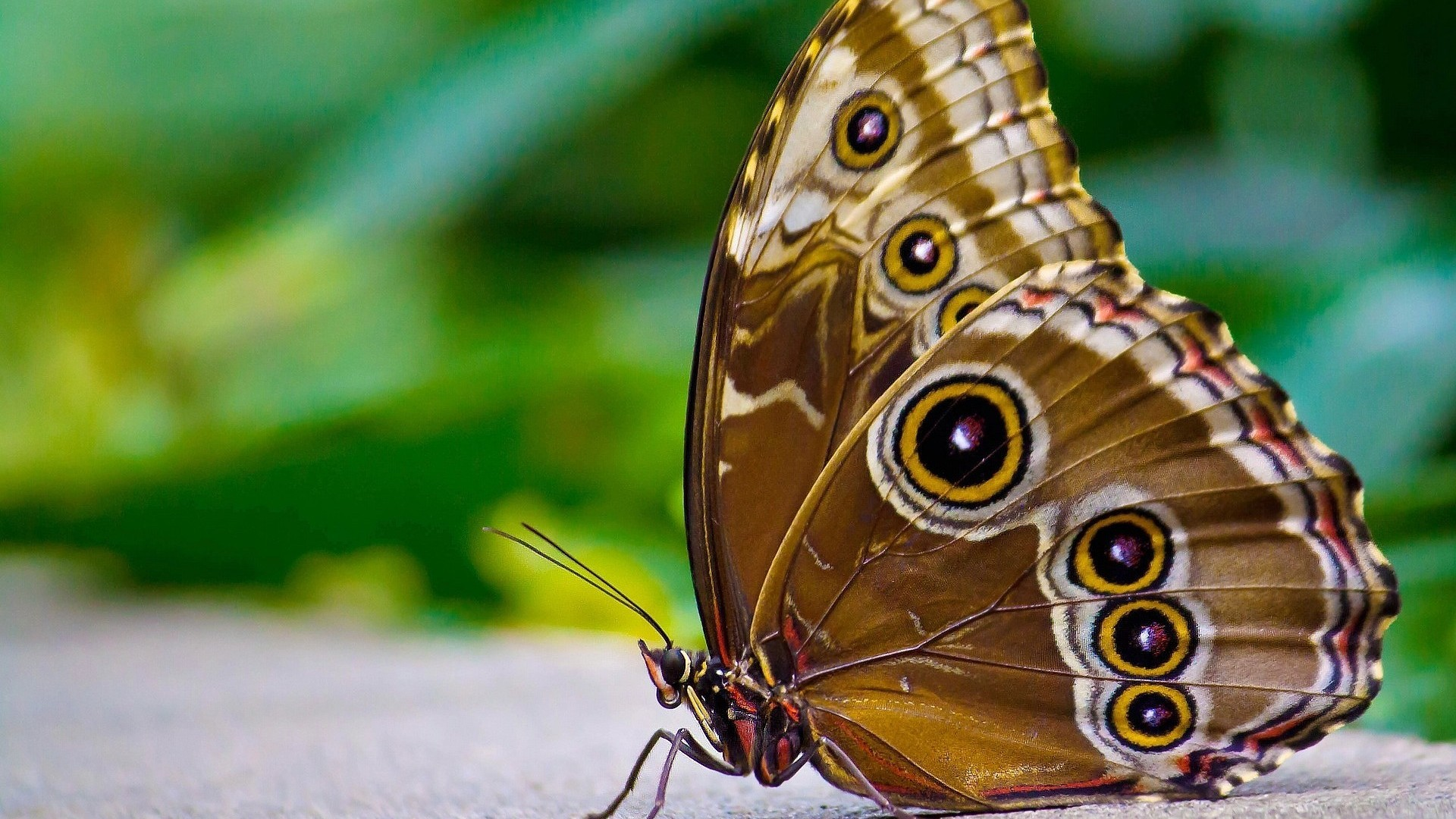 Singapore Wallpaper Hd 2 Insects Hd Wallpapers 1808 Insects Hd Wallpapers